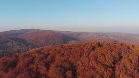 ANTENA: Piękni jesieni drzewa w koloru żółtego, pomarańcze i czerwieni lesie na pogodnym jesień dniu, Spadku ulistnienie w jesień zdjęcie wideo