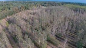 Antena strzał zawalona kabina w polu blisko lasu i rzeki zbiory wideo