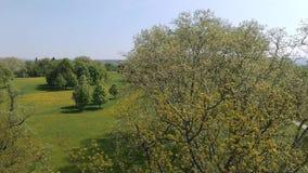 Antena strzału miasta park Stuttgart, piękni drzewa, łąka z kwiatami zbiory