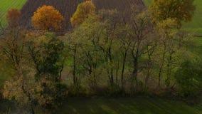 Antena strzelał drzewa w hedgerow, wibrujący jesieni ulistnienie zbiory