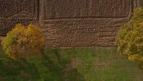 Antena strzelał drzewa w hedgerow, wibrujący jesieni ulistnienie zbiory wideo