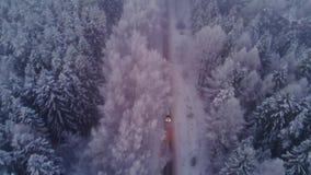 Antena strzelał samochodowego jeżdżenie przez śnieżnego sosnowego lasu w zimie zdjęcie wideo