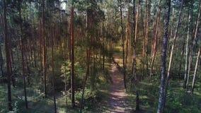 Antena strzelał mieszane lasowe sosny i brzozy Kamera lata up w lesie zbiory