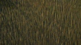 Antena strzelająca nieżywi drzewa zbiory