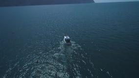 ANTENA: Um rebanho dos golfinhos salta da água ao lado do barco Os golfinhos nadam na frente do barco golfinhos vídeos de arquivo