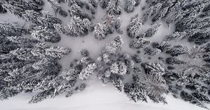 Antena vertical aérea dianteira acima da terra nevado com tempo nublado do mau forestCloudy das madeiras Dolomites do inverno ita vídeos de arquivo