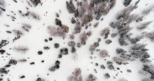 Antena vertical aérea dianteira acima do tempo nevoento nublado do mau forestCloudy nevado das madeiras Dolomites do inverno ital vídeos de arquivo