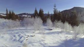 ANTENA: Voo sobre a floresta no inverno video estoque