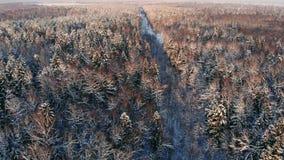 ANTENA ZAMKNIĘTA W GÓRĘ latania nad zamarzniętymi treetops w śnieżnym mieszanym lesie przy mglistym wschód słońca Złoty słońca wy zbiory wideo