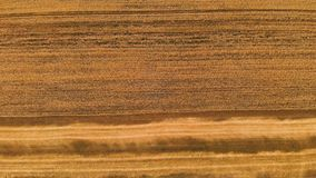 Antenn över sikt från ett delvist mejat moget vetefält Panorama- rörelse över vete Jordbruksproduktion av bröd arkivfilmer
