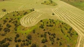 Antenn av rader av Hay Wheat i paddock lager videofilmer