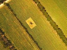 Antenn av vingården i den Coonawarra regionen Royaltyfri Fotografi