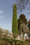 Antenn för mobiltelefoner som kamoufleras av cypressen royaltyfri fotografi