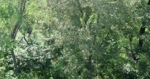 antenn 4K av flyget över en härlig grön skog i ett lantligt landskap Skjutit från helikoptern arkivfilmer