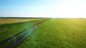 ANTENN: Lågt flyg över gräsplan- och gulingvetefält stock video