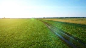 ANTENN: Lågt flyg över gräsplan- och gulingvetefält lager videofilmer