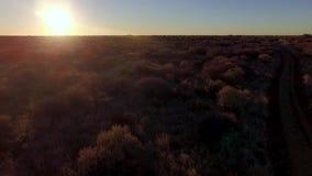 Antenn som skjutas av trädsavann på solnedgången arkivfilmer