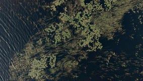 Antenn som upprättar skottet av en sjö i den georgiska fjärden, Ontario stock video
