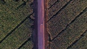 Antenn: ställning för två personer mellan vetefält lager videofilmer