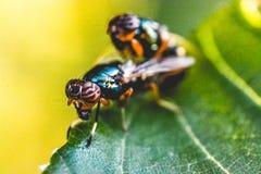 Antenna, Biology, Blur Royalty Free Stock Photo