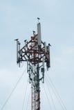 Antenna and bird. Antenna, cellular telecommunications wireless blue Royalty Free Stock Photos