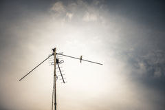 Antenna and bird Stock Photos