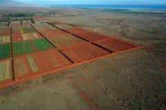Antenna dei campi dell'azienda agricola delle fasi differenti dell'età che corrono al Fotografia Stock