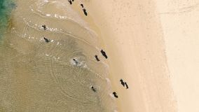 Antenna dell'acqua bassa dei turisti in chiaro sui turisti rotationAerial lenti di una spiaggia incontaminata che passano acqua s video d archivio