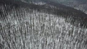 Antenna della foresta di inverno Antenna nevosa della foresta di inverno del metraggio del fuco video d archivio