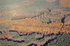 Antenna della foresta di Sherwood Fotografie Stock