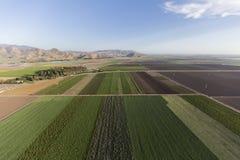 Antenna della terra dell'azienda agricola dei raccolti di fila di California Immagine Stock Libera da Diritti