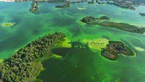 Antenna di ampio fiume con le isole verdi e le alghe verdi in acqua video d archivio