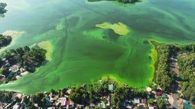 Antenna di ampio fiume contaminata con le alghe verdi con la pesca delle case sulla banca archivi video