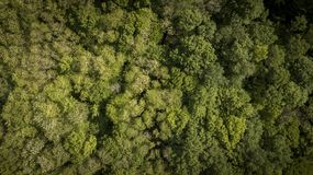 Antenna di sorvolare una bella foresta verde in un paesaggio rurale, Gironda fotografia stock libera da diritti