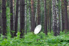 Antenna in the forest Royalty Free Stock Photo