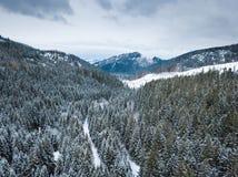 ANTENNA: Foresta di inverno fotografia stock libera da diritti
