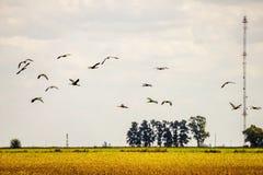 Antenna nel giacimento della soia e nella volata degli uccelli Immagine Stock