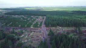Antenna, terreni coltivabili del pino, Nuova Zelanda Instaurazione del colpo stock footage
