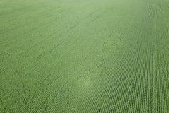 Antenna verde del campo di grano, antenna del campo di grano Fotografia Stock Libera da Diritti