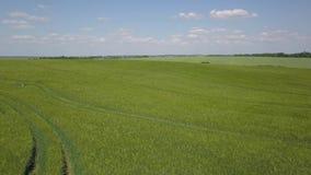 Antenne: Ansicht Flug über dem grünen Feld und Kurve schleppen 4k stock footage