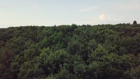 Antenne: Ansicht Flug über dem Wald 4k stock video footage