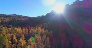 Antenne arrière au-dessus de vallée alpine de montagne et de bois oranges de forêt de mélèze en automne ensoleillé Coloré extérie banque de vidéos