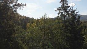 Antenne d'un bourdon en hausse dans les Carpathiens avec un effet d'arc-en-ciel en été clips vidéos