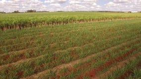 Antenne de plantation de canne à sucre banque de vidéos