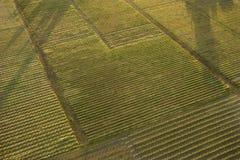 Antenne der Getreide. Lizenzfreie Stockbilder