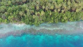 Antenne des Einsäumens des Riffs und der Tropeninsel in Papua-Neu-Guinea stock video