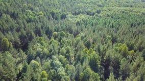 Antenne des Fliegens über einem schönen grünen Wald in einer ländlichen Landschaft stock video