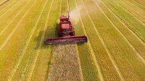 Antenne des roten Mähdreschers, der an großem Weizenfeld arbeitet stock video footage