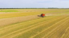 Antenne des roten Mähdreschers, der an großem Weizenfeld arbeitet stock video