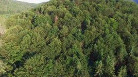 Antenne die omhoog bosbergkant vliegen stock videobeelden
